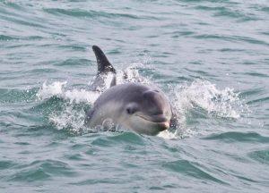 dauphins-3