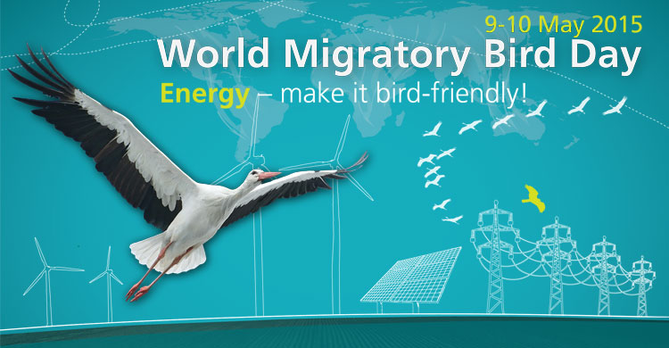 Word Migratory Bird Day 2015